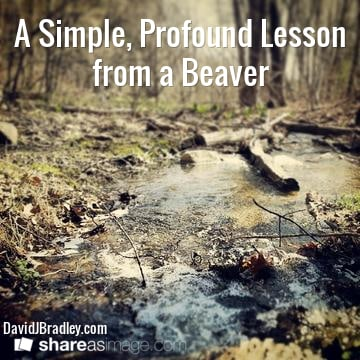 A Simple, Profound Lesson from a Beaver
